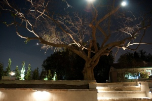 landscape lighting garden and trees